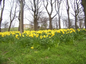 Sheaf Valley Park in spring
